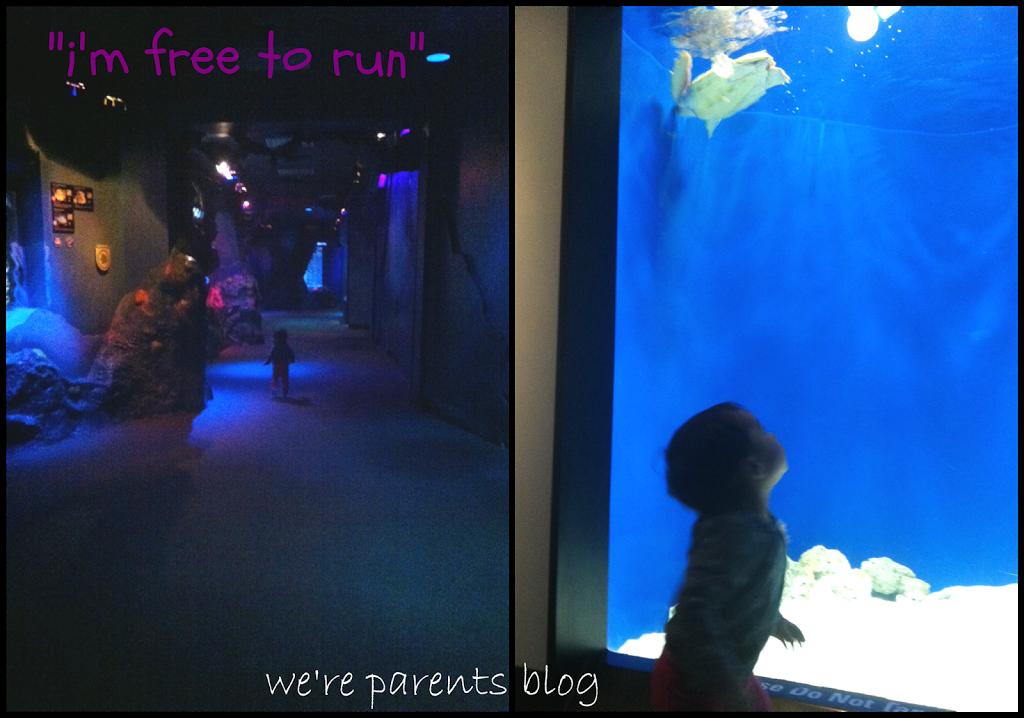 Adventure Aquarium Frogs Nature S Messengers Exhibit