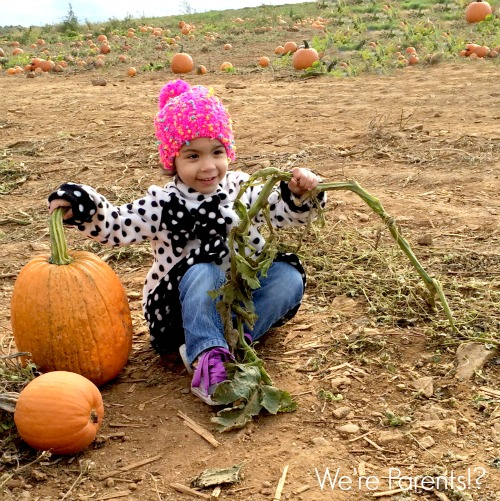 chester springs fall pumpkin patch