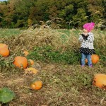 chester springs pumpkin patch