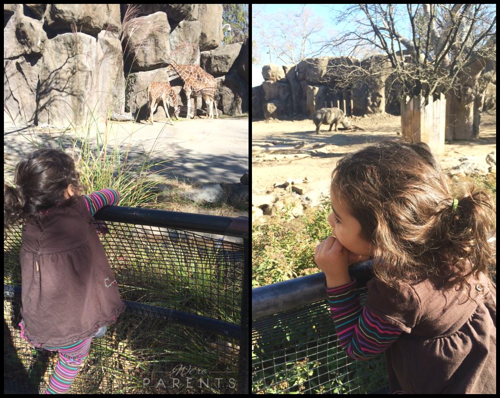 philadelphia zoo african plains