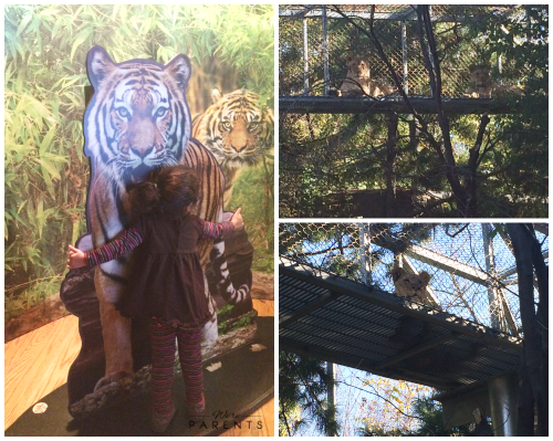 philadelphia zoo first niagara big cat falls